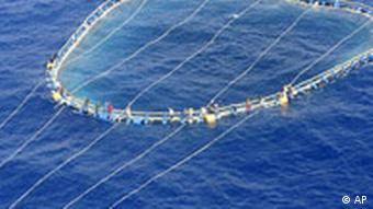 A group of immigrants hanging on a tuna fishing net after their boat sank off the coast of Malta this spring