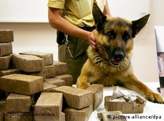 Ovčar pit je otkrio 140 kilograma hašiša