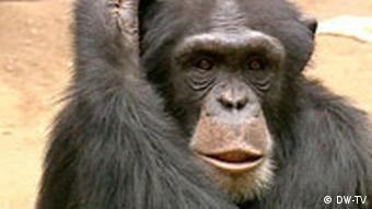 Many primate species are endangered worldwide