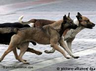 Perros callejeros en Moscú: peligro público.