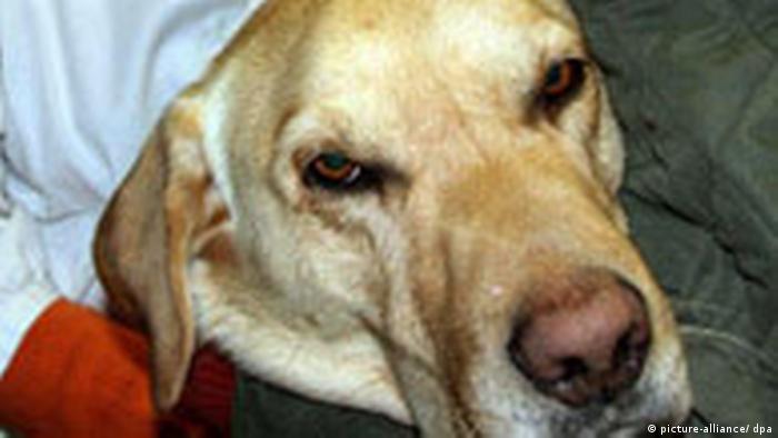 hund durchfall blähungen