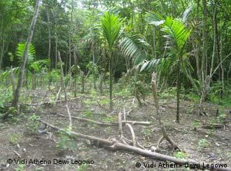 A palm oil plantation in Aceh