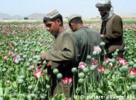 در حال حاضر مزارع خشخاش تبدیل به جزئی جداناپذیر از افغانستان شدهاند. با دیدن تصویر یک مزرعه خشخاش میتوان به راحتی حدس زد که این مزرعه در کدام کشور واقع شده است