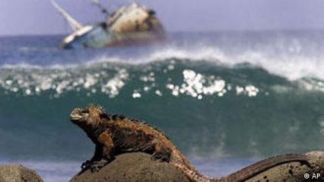 Una iguana, sentada en una roca delante el petrolero hundido.