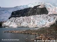 Colonia de pingüinos reales ante un glaciar en la costa de Georgia del Sur.
