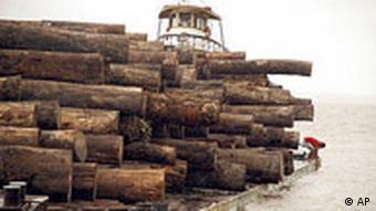 BdT Brasilien Rodung in Amazonas Holz auf Floß