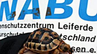Deutschland Artenschutz Schildkröte NABU Artenschutzzentrum