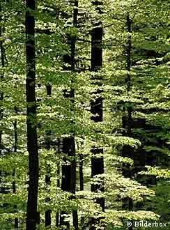 La UNESCO incluyó a la región entre las 14 reservas de la biosfera en Alemania.