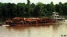 A barge carrying dozens of enormous tree trunks to a sawmill passes through on the Amazon river, northern Brazil, in this photo taken Aug. 25, 1999. Although some 14 percent of the rain forest has been cut down, it's hard to convince people there is a danger when the riverbank is a wall of exuberant green jungle.