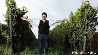 Rows of vines at Im Zwoelberich