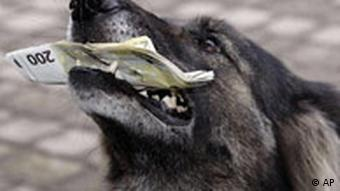German custom's money sniff dog Voxi has a bundle of Euro banknotes between her fangs