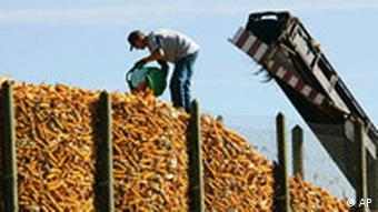 A farmer fills up his corn storage on the fields at Bad Krozingen near Freiburg, southwestern Germany