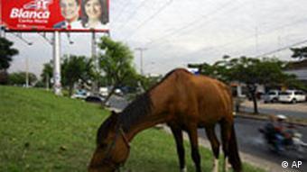 Paraguay Wahlen Plakat mit Pferd