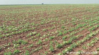 Felder in Thüringen, Erde Boden