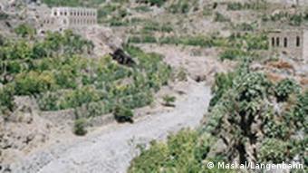Kaffeepflanzen im Jemen