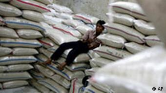 Over 60 percent of Asia's poor population depends on rice