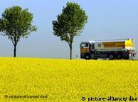 La colza es utilizada para producir biocombustible.