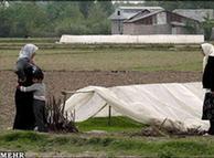بخش عمده برنج مورد نیاز بازار ایران از هند وارد میشود