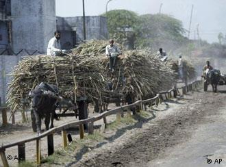 Farmers ride carts loaded with sugar cane into the Simbhaoli Integrated Sugar Complex which houses the ethanol plant at Simbhaoli, Uttar Pradesh, India