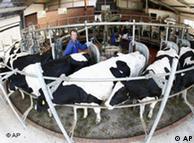 Μονάδα σταβλισμένης κτηνοτροφίας στη Γερμανία