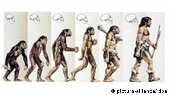 Illustration of the physical evolution of hominids