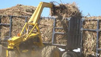 Zuckerrohverarbeitung auf Ithuba, Foto: Bölinger/ DW