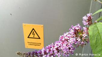Flieder am Trafo-Häuschen. Quelle: privat