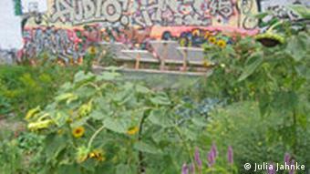 Rosa Rose Garten in Berlin. Quelle: Julia Jahnke