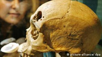 A Neanderthal skull at the Neanderthal Museum in Mettmann, North-Rhine Westphalia