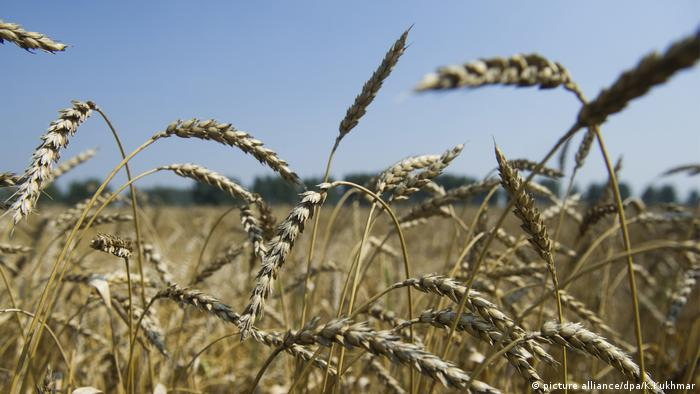 """Aunque la iniciativa pretende gestionar el riesgo y la demanda de agua en momentos de incertidumbre como sequías e inundaciones, para Aguado existe el precedente de la crisis de alimentos de 2008 en la que el precio del trigo se quintuplicó""""."""