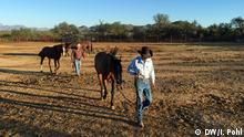 USA Reportage aus Arizona Cowboys auf der Chilton Farm