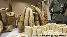 A Hong Kong Customs officer stands guard over seized ivory at the Hong Kong international airport (picture-alliance/dpa/A. Hofford)
