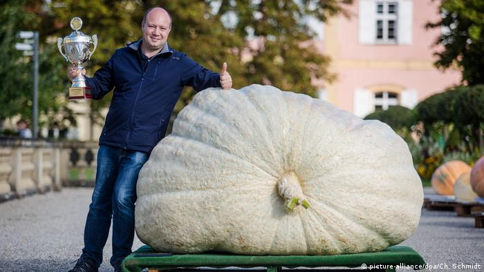 Matthias Würsching, pictured above in Ludwigsburg, won this year's German championship with his 901-kilo (1,986-pound) white pumpkin (picture-alliance/dpa/Ch. Schmidt)
