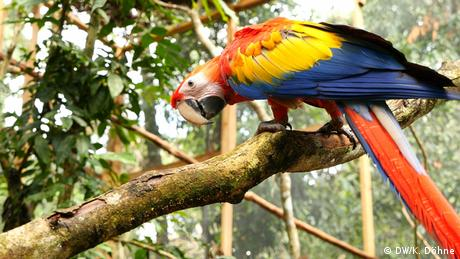 A red macaw