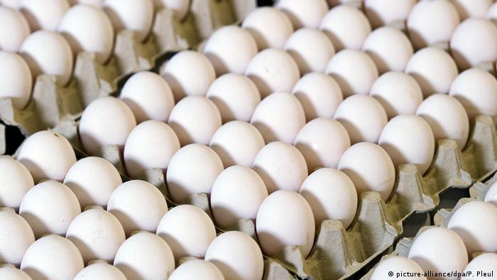 Huevos en una empresa agrícola en Brandeburgo.