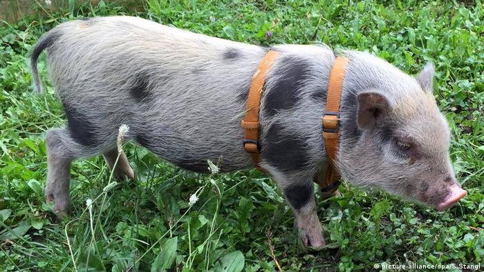 Suche nach Schwein Rudi BdT (picture-alliance/dpa/S.Stangl)