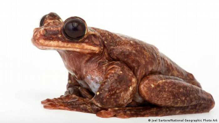 Toughie the frog National Geographic (Joel Sartore/National Geographic Photo Ark)