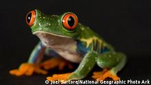 Frosch National Geographic Fotografie
