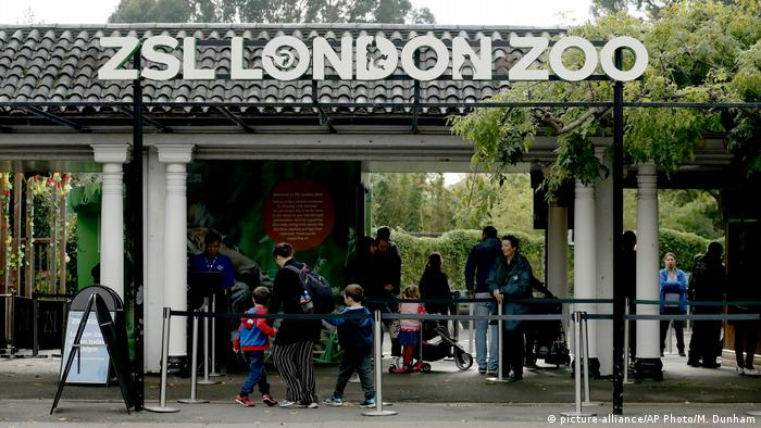 Großbritannien London - Gorilla bricht aus Zoo aus (picture-alliance/AP Photo/M. Dunham)