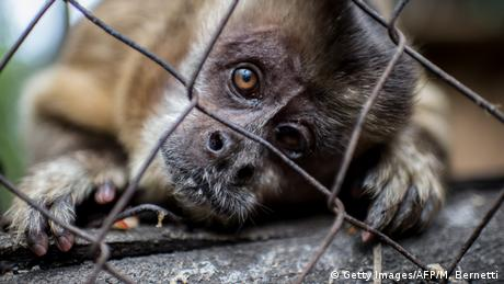 A close-up of a small monkey looking into the camera through a cage