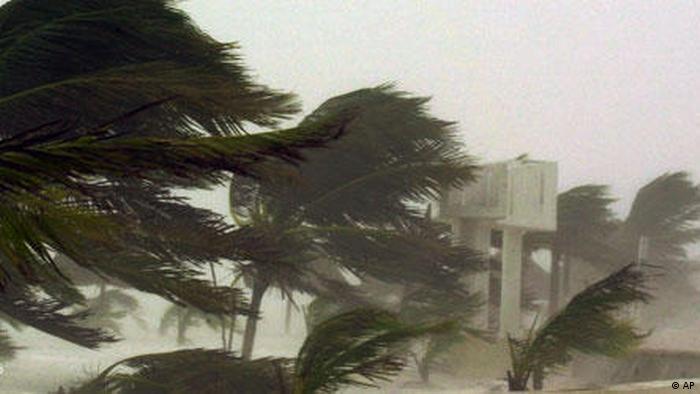 Palmen im Hurrikan (foto: AP Photo/Jose Luis Magana)