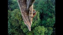 Wildlife Photographer of the Year Award