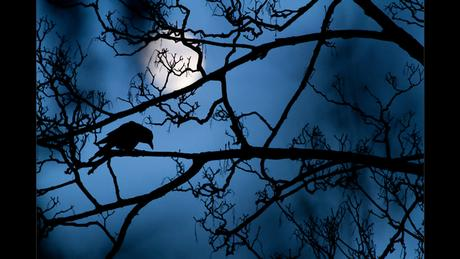 Wildlife Photographer of the Year Award - The moon and the crow (Picture: Gideon Knight)