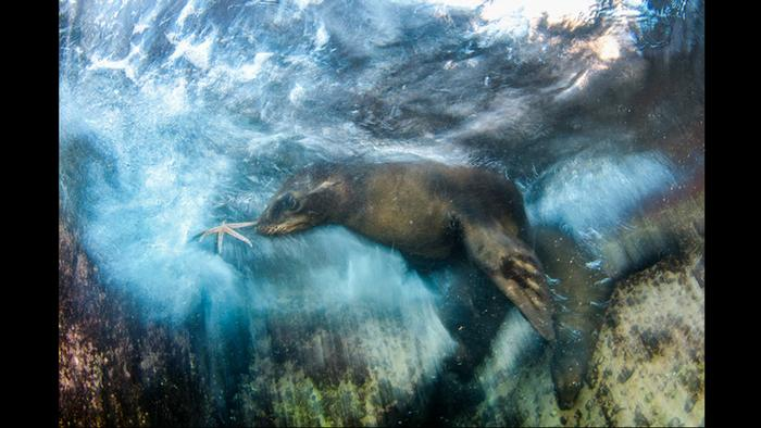Wildlife Photographer of the Year Award - Star player (L.J. Sandoval)