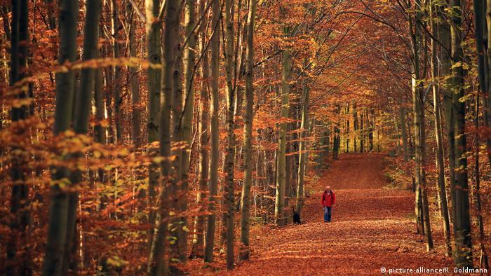 Осінь у Німеччині