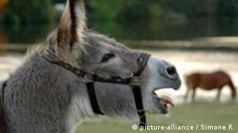 Lueneburger Heide Ein Esel im Internationalen Muehlen - Freilicht - Museum in Gifhorn
