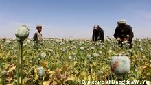 Afghanistan Opiumanbau
