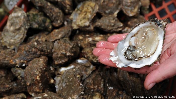 Deutschland - Austernzucht auf Sylt (picture-alliance/dpa/A. Warmuth)