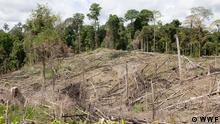 Deforestation in Indonesia's East Kalimantan (WWF)