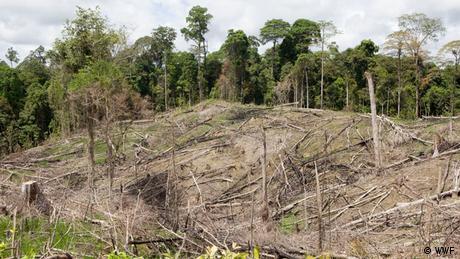 Indonesien Ost-Kalimantan, Regenwald-Abholzung (WWF)
